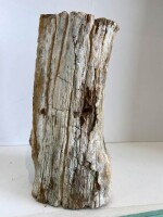 Graz_Petrified Wood Log1